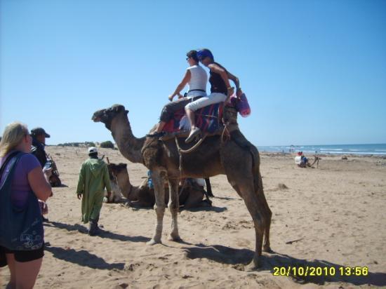 Promanade à dos de dromadaire sur la plage de Essaouira
